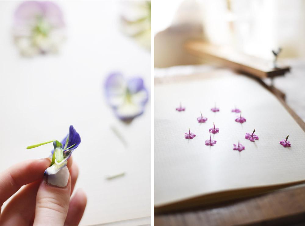 suszone kwiaty suszenie kwiatow 4